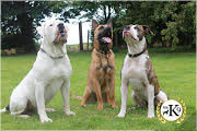totalk9 personal protection dogs 3