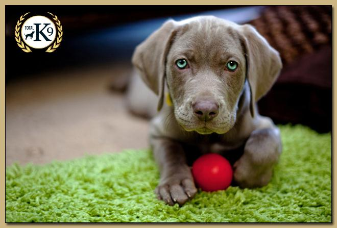 TOTAL K9 ® - Perfect Puppies