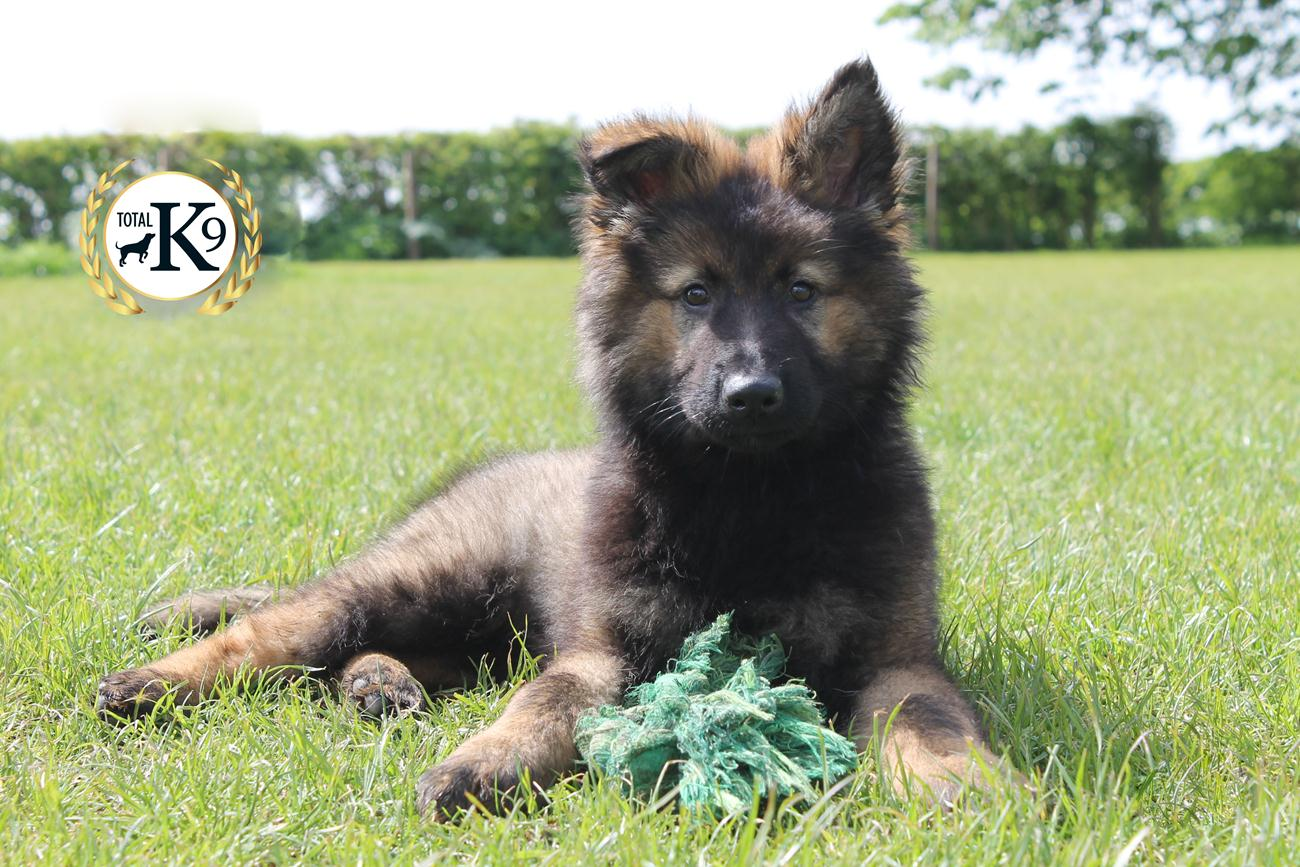 TOTAL K9 ® - Perfect Puppies - Play Time