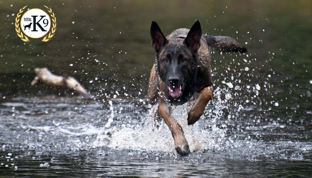 TOTAL K9 - Security, Police & Prison Dogs - Speed & Power