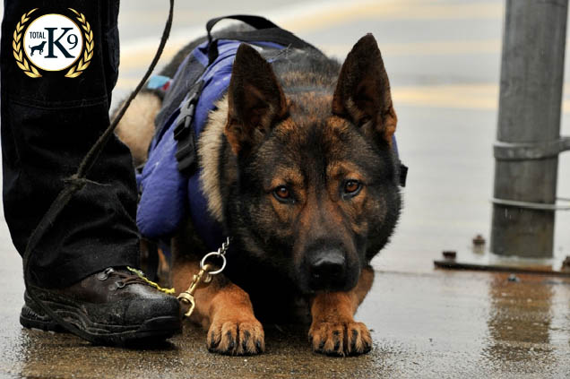 Security, Police & Prison Dogs