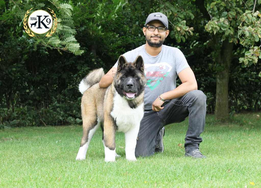 TOTAL K9 ® - One to One Dog Training Man 2