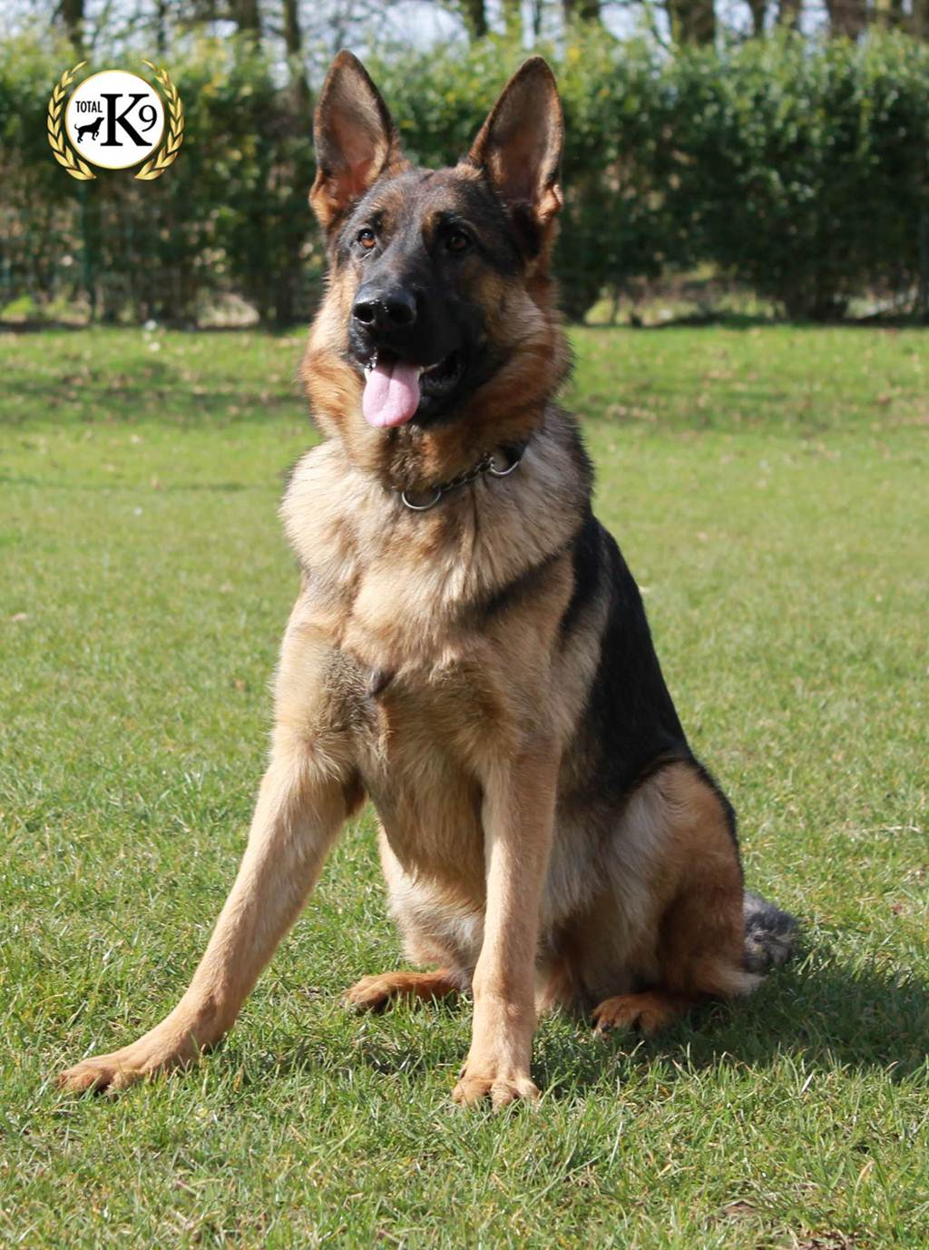 Home Protection Dog Breeds
