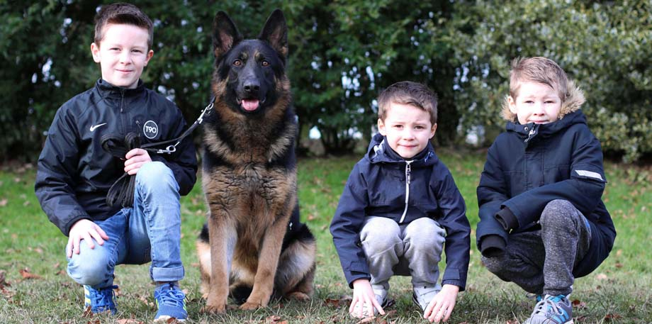 total k9 police dog training