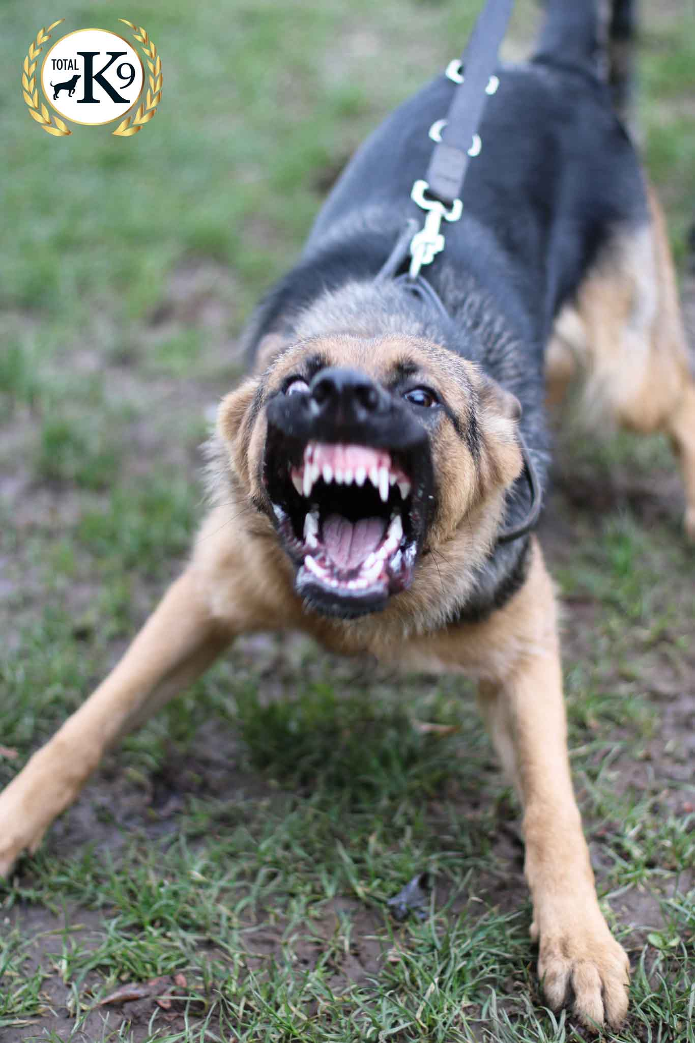protection dog furious total k9