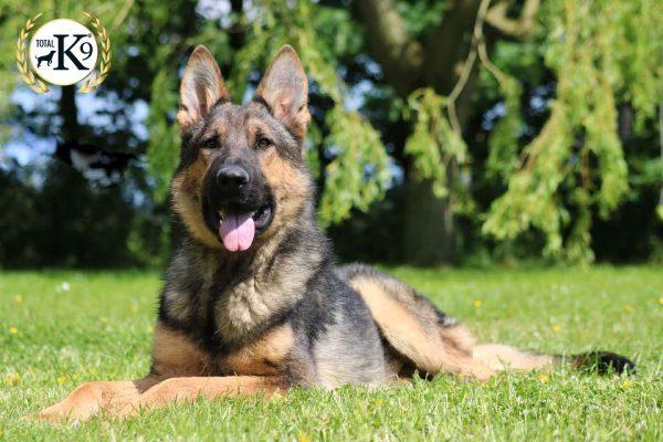 Turner protection dog in UK