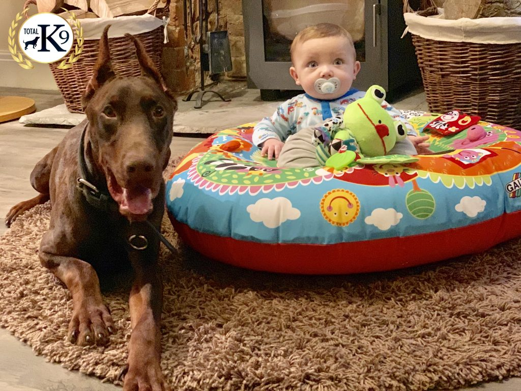 introducing a baby to your dog