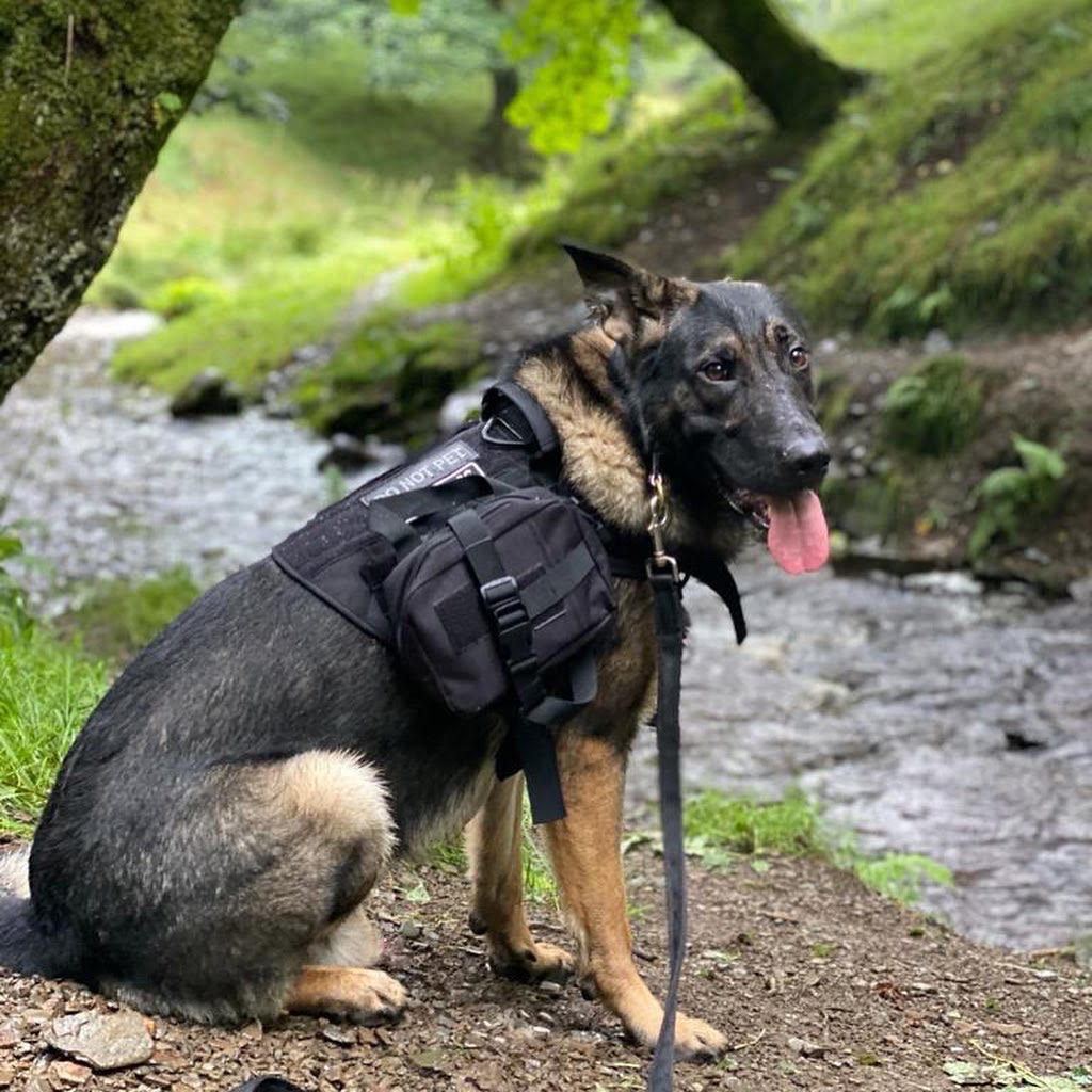 TOTAL K9 Protection dogs cool