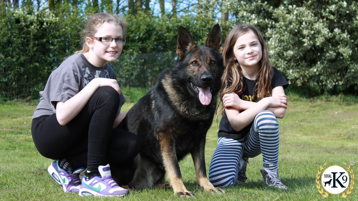 total k9 protection dog guarding family and kids
